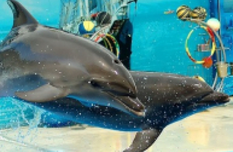 Анапский дельфинарий Nemo