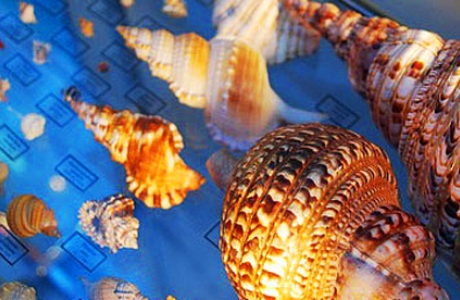 Музей морских ракушек