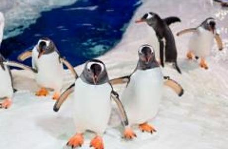 Антарктический центр Келли Тарлтона