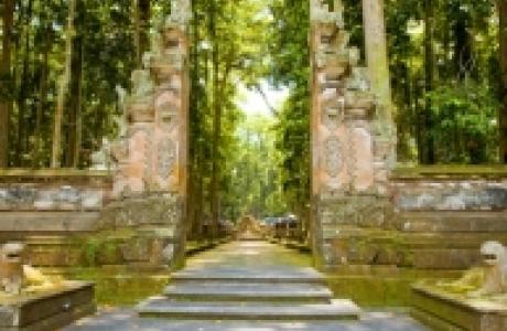 Обезьяний лес