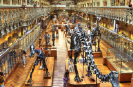 Музей естественной истории и Зоопарк