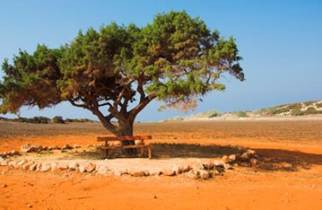 Лесной парк Мыс Каво Греко