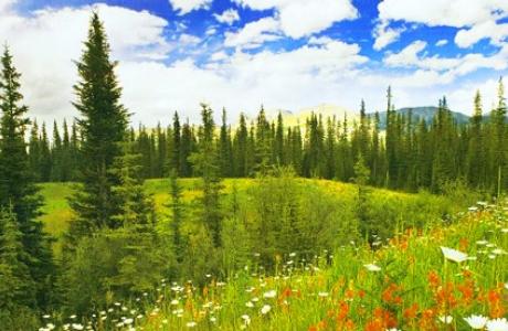 Парк природы