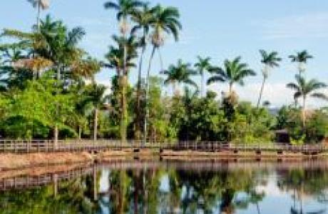 Королевский Пальмовый Заповедник
