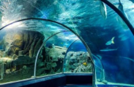 Океанариум Sochi Discovery World