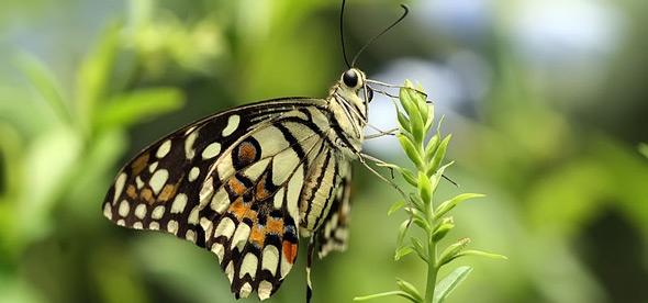 Заповедник бабочек Джумалон