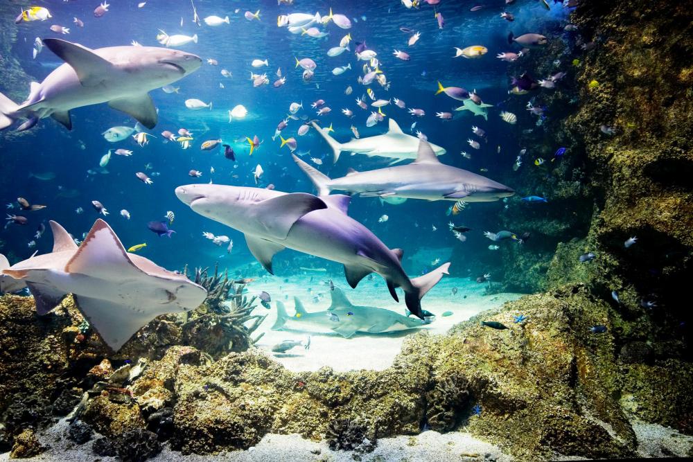Сиднейский аквариум фото