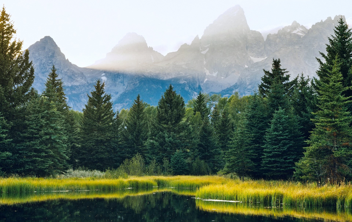 Йеллоустонский национальный парк флора